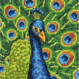 Изображение Красочный павлин (Colourful Peacock)