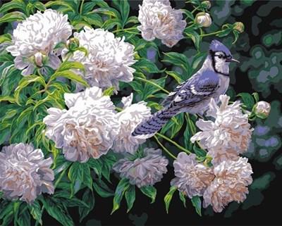 Изображение Сойка и цветы (Arrendajo azul y capullos)