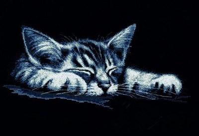 Изображение Мой котёнок