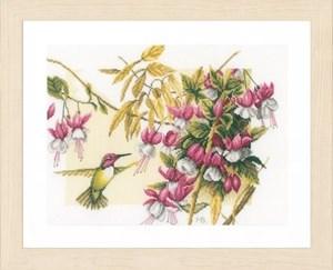 Изображение Колибри и фуксия (Colibri and Flowers)