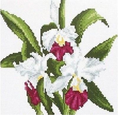 Изображение Белые цветы