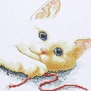 Изображение Котёнок
