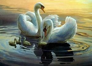 Изображение Лебединая семья