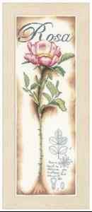 Изображение Розовые розы (Pink roses)