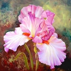 Изображение Розовый ирис