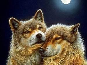 Изображение Волк и волчица