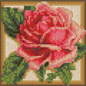 Изображение Румяная роза