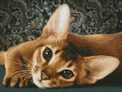 Изображение Абиссинская кошка