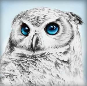 Изображение Взгляд совы