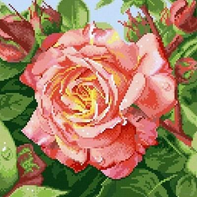 Изображение Чайная роза
