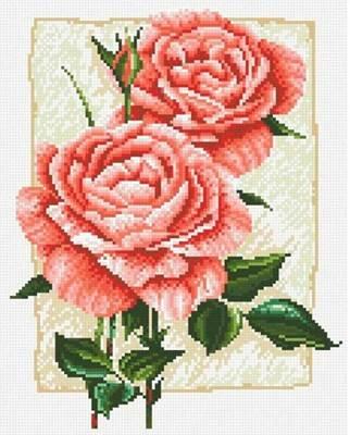 Изображение Садовая роза