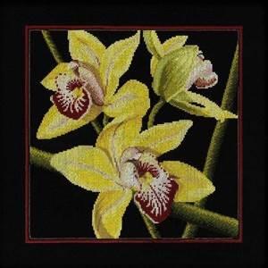 Изображение Жёлтые орхидеи
