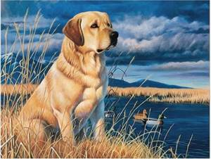 Изображение Лабрадор на охоте