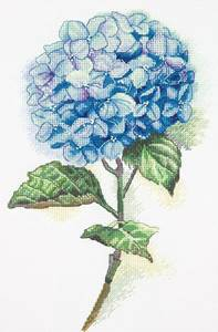 Изображение Голубая гортензия