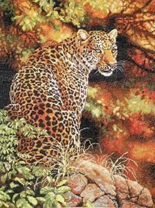 Изображение Взгляд леопарда