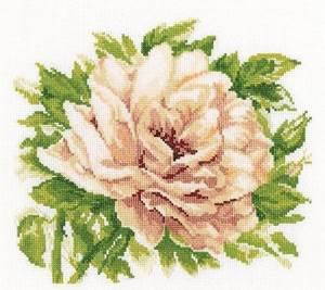 Изображение Английская роза