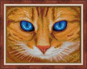 Изображение Синеглазый кот