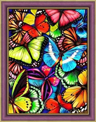Изображение Яркие бабочки