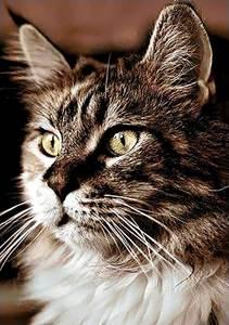 Изображение Домашний кот