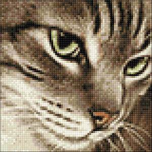 Изображение Загадочный кот