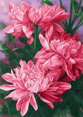 Изображение Хризантемы