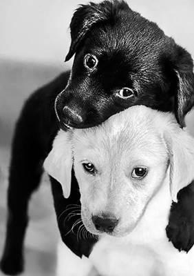 Изображение Черный и белый щенок