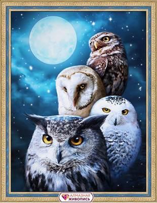 Изображение Ночные совы