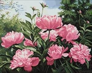 Изображение Пионов цвет