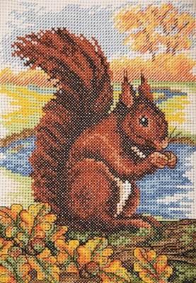 Изображение Красная белка (Red Squirrel)