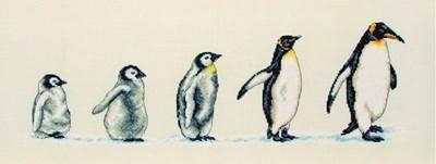 Изображение Пингвины в ряд (Penguins In A Row)