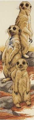 Изображение Сурикаты (Meerkats)