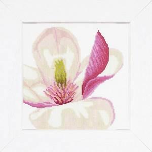 Изображение Цветок магнолии (Magnolia Flower)