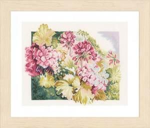 Изображение Герань (Geraniums)