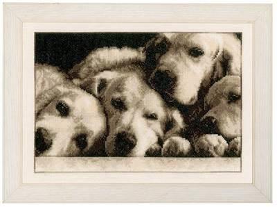 Изображение Лабрадоры (Labradors)
