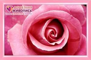 Изображение Бутон розы
