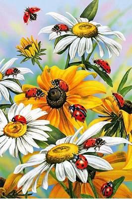 Изображение Солнечные цветы