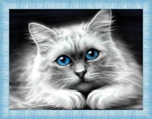 Изображение Голубоглазая кошка