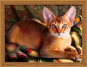 Изображение Абиссинский кот