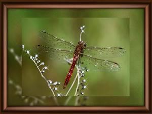 Изображение Полёт стрекозы