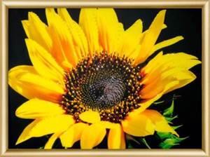 Изображение Солнечный цветок