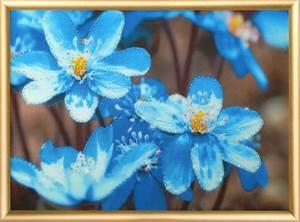 Изображение Первоцветы