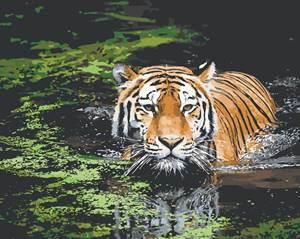 Изображение Тигр в воде
