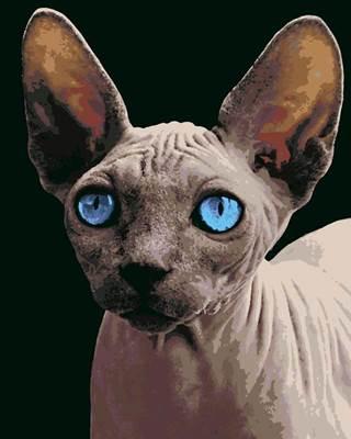 Изображение Сфинкс с голубыми глазами