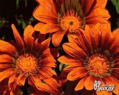 Изображение Яркие цветы