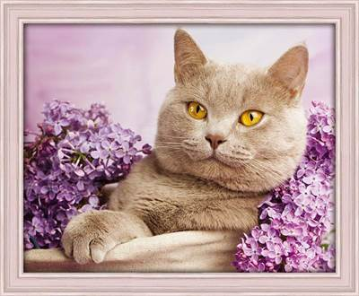 Изображение Кот в сирени
