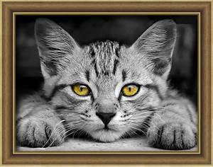 Изображение Желтоглазый котёнок