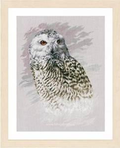 Изображение Белая сова (Snowy Owl)