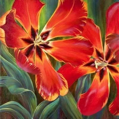 Изображение Распустившийся тюльпан