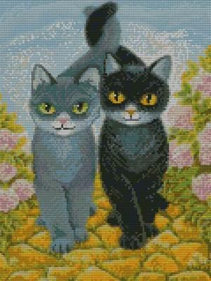 Изображение Коты