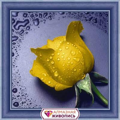 Изображение Желтая  роза